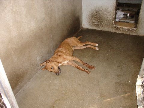 Carson Animal Shelter Adoptable Dogs